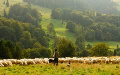 Our Shepherd